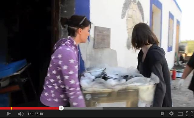 Volontarie aiutano a rimettere in sesto il Centro di recupero per tartarughe marine sull'isola di Linosa devastato da un terribile incendio nove mesi fa. Immagine estratta dal video di presentazione del Centro rinato