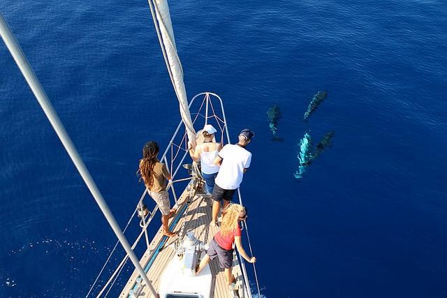 La onlus Tethys organizza due iniziative per incontrare da vicino i cetacei e contribuire alla loro salvaguardia