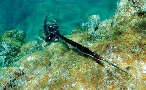 Mimetismo e postura corretta sono indispensabili nella pesca neiu bassifondi ai saraghi. Foto Cossu